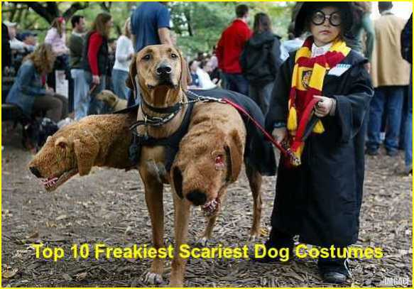 Boo Wow! The Top 10 Freakiest Scariest Halloween Dog Costumes ...