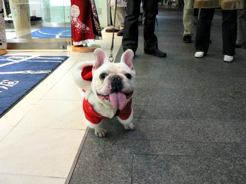 Purina's 2015 National Dog Show: The winner of the Non-Sporting Group was a French Bulldog named Ruby