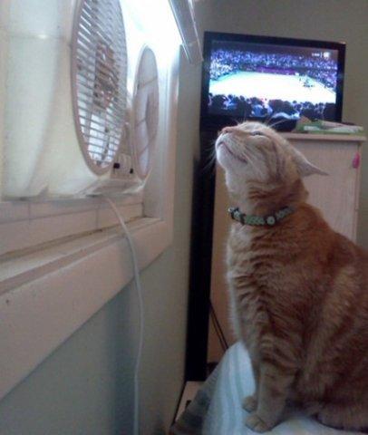 Cat enjoying fan: Fun107.com