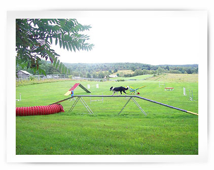 Canine Country Getaway Agility Course