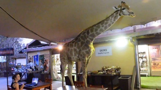 A Giraffe Walks into a Restaurant (You Tube Image)