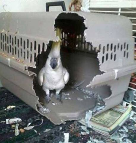 Guilty Parrot (Photo via Global Animal Transport)