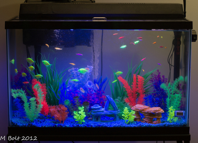 Aquarium with a variety of glofish