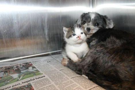 A Dog and her Kitten (Photo via Pinterest)