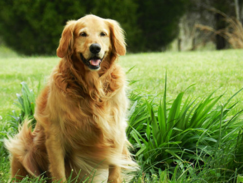 New Website for Pet Sitting Services: Find trusted pet sitters for dogs