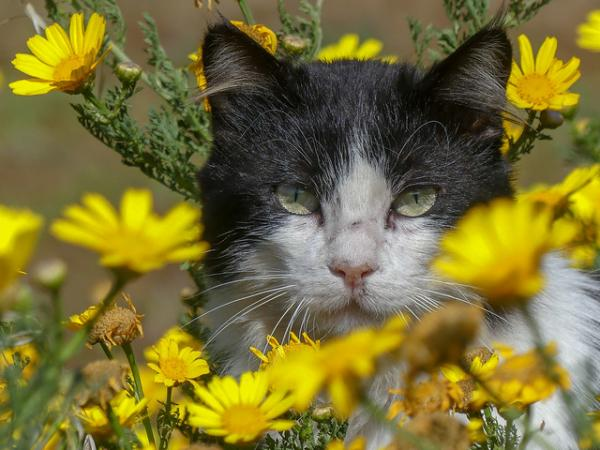 Flower Power Scower: The Internet's Top 10 Grumpiest Cats
