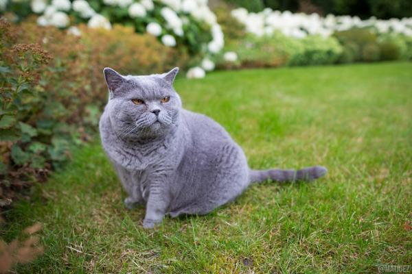 Chubby Gray Grumpy Cat: The Internet's Top 10 Grumpiest Cats