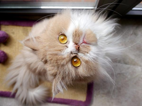 Twisted Sister Cat: The Internet's Top 10 Grumpiest Cats