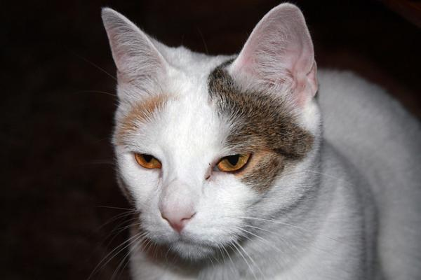 Thousand Yard Stare Cat: The Internet's Top 10 Grumpiest Cats
