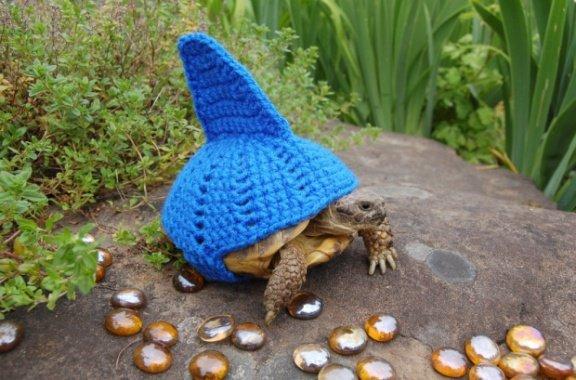 Shark Turtle (Image via The Guardian)
