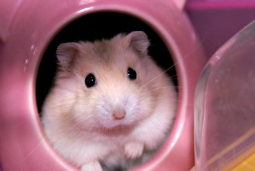 5 Best Pets For Kids Before Getting A Dog Or Cat: Small rodents make good starter pets