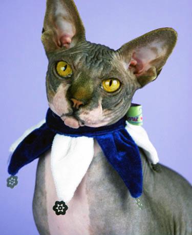 Hanukkah Cat Collar