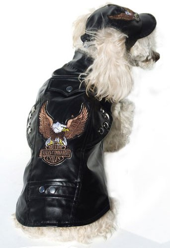 3b6b8c143f1 Bow WOW! The Latest Biker Dog Fashion