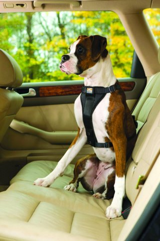 Kurgo TruFit Harness for Dogs