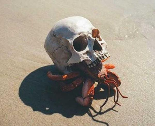 The Top 10 Weird & Bizarre Artificial Hermit Crab Shells