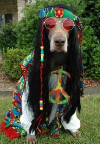 Hippie Dog (Image via Facebook)