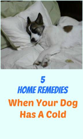 5 Home Remedies For When Your Dog Has A Cold | Petslady com