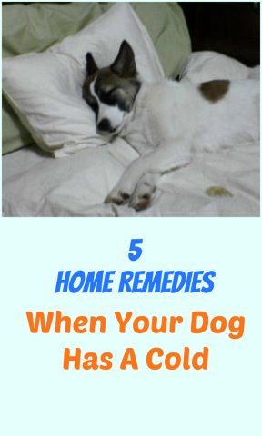 5 Home Remedies For When Your Dog Has A Cold Petslady Com