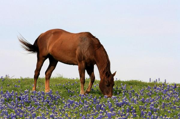 horse grazing in wildflowers