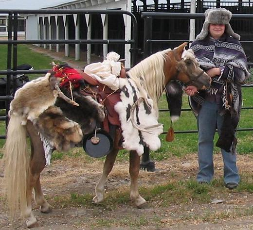 Palomino Shetland Pony dressed as a fur trader's horse (Photo by firesongponies/Creative Commons via Wikimedia)
