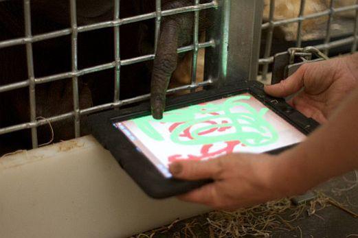Orangutan using iDraw: image via thinkdigit.com