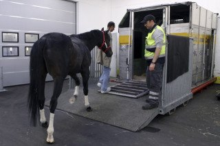 Horse from Argentine boards a Lufthansa freight container: Photographer: Hannelore Foerster/Bloomberg