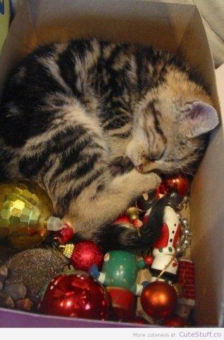 Kitten Ornament (Image via CuteStuff.co)