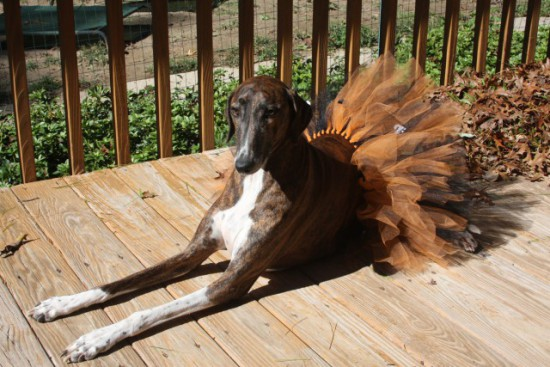 Halloween Tutu costume for dogs: © TutuCuteByMiniM