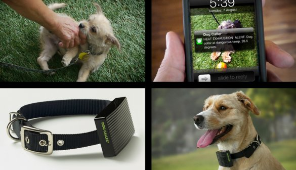 The Dog Caller alerts owners when dogs get too hot: composite image via fastcocreate.com