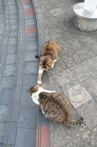 Cats outnumber people on Tashirojima Island in Japan