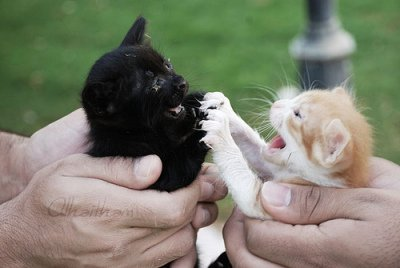 Kittens Fighting: Source: kittiescutestuff