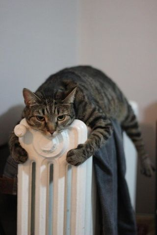 Radiator Cat (Image via tumblr)