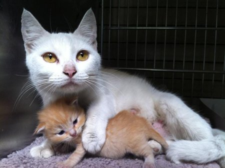 Lily and her baby, foster cats, number one photo 2012, Ravishing Rescue cover girl.: image via 360photocontest.com