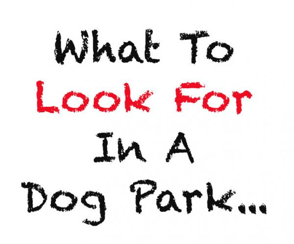 What To Look For In A Dog Park