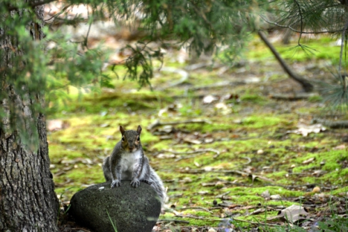 Once You Know For Certain That Squirrels Are The Problem, Youu0027ll Know  Exactly How To Fight Back!