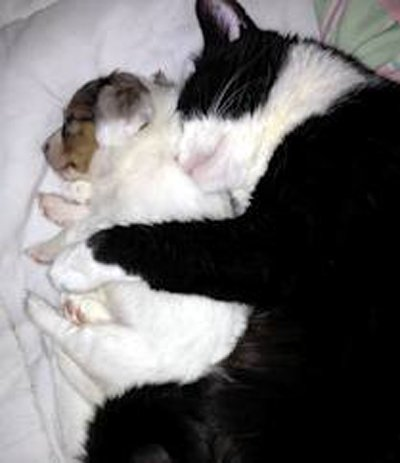 Cat and dog sleeping peacefully: love-meow.com