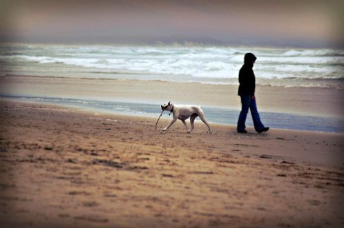 Man Walking His Dog on the Beach: Dogs can be icebreakers for conversations
