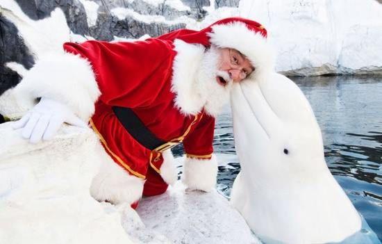 Santa Has A Whale Of A Time (Image via Pinteret)