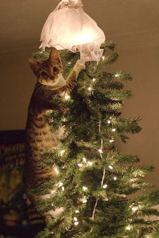 I Was Just Straightening The Angel, Honest! (Image via The Crazy Cat)