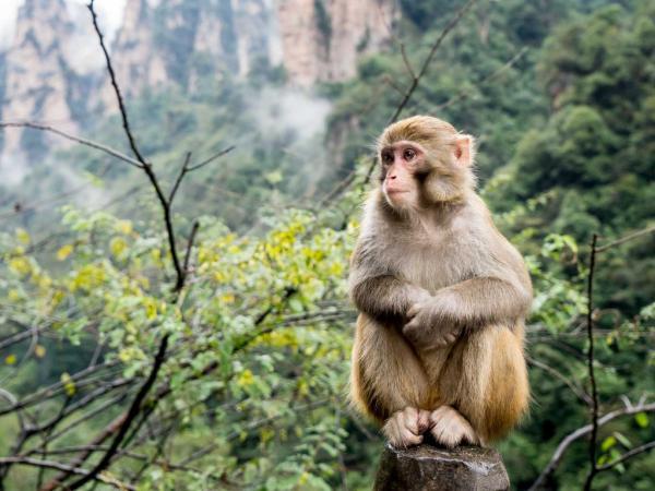 Wild Amazon Monkey