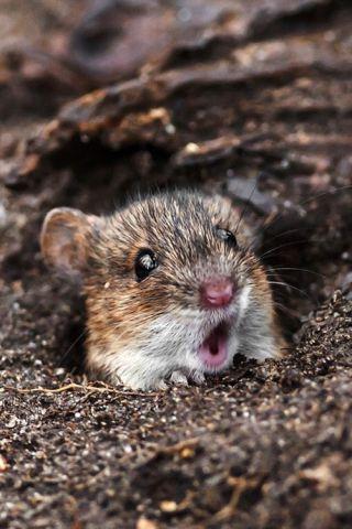 Cute Mouse (Photo via Tumblr)