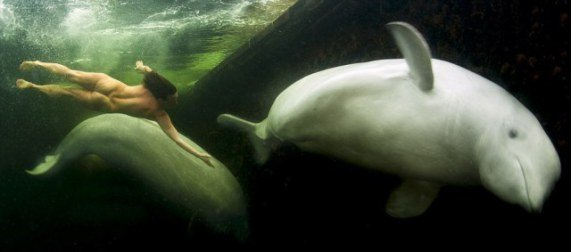 Natalia Free-Diving Nude With Beluga Whales (You Tube Image)