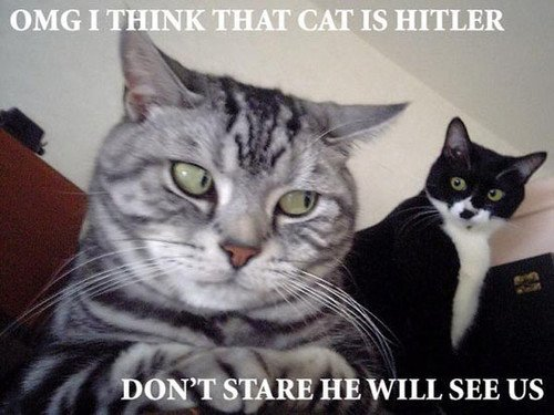 omg I think that cat is Hitler