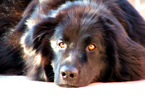 Battling Boredom For Dogs: A bored dog can be a destructive dog