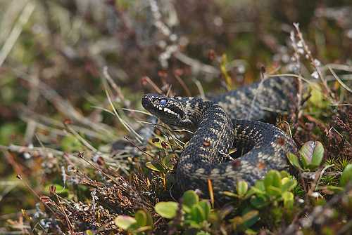 Norway Rescinds 40-Year-Old Ban on Reptiles