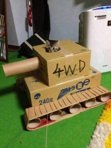 Tank Cat (Image via Nothing but Kitty CATS)