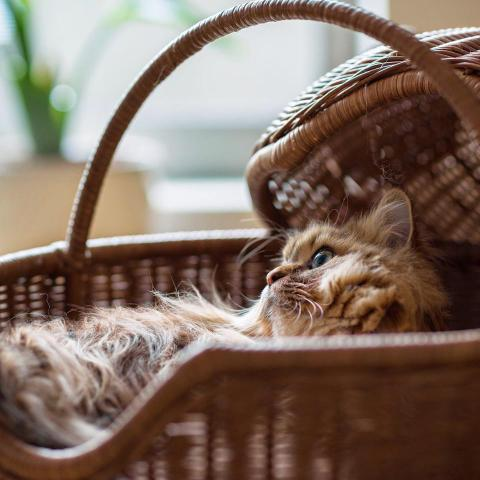 Basket Case Kitty (Nothing But Kitty Cats)