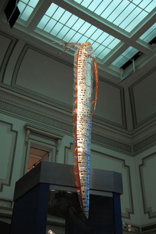 Oarfish on display at the Smithsonian (Photo by Tim Evanson/Creative Commons via Wikimedia)