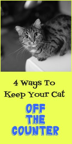 4 Proven Ways To Keep Your Cat Off The Counter Petsladycom