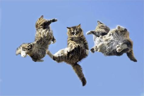 Cats Falling: Source: ohmgodfacts.com